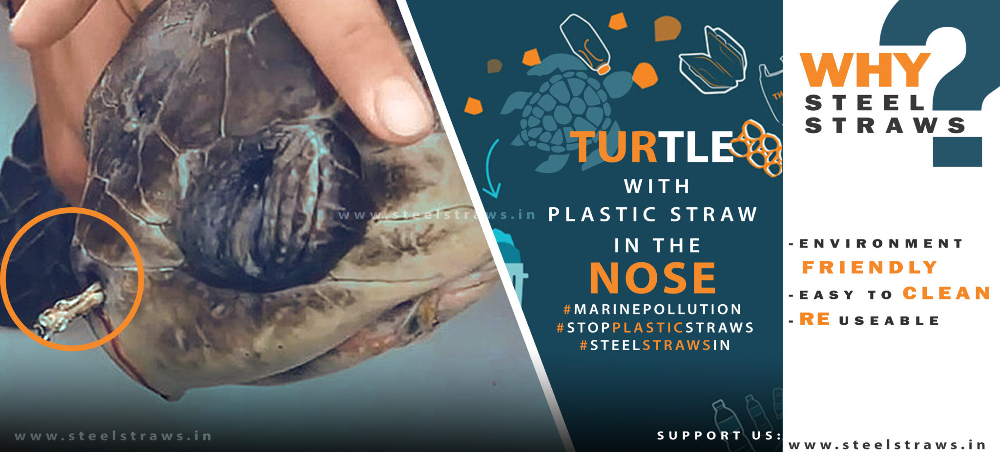 turtle with plastic straw stuck